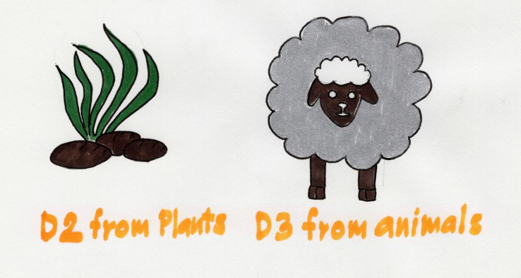 Vitamin D2 and D3