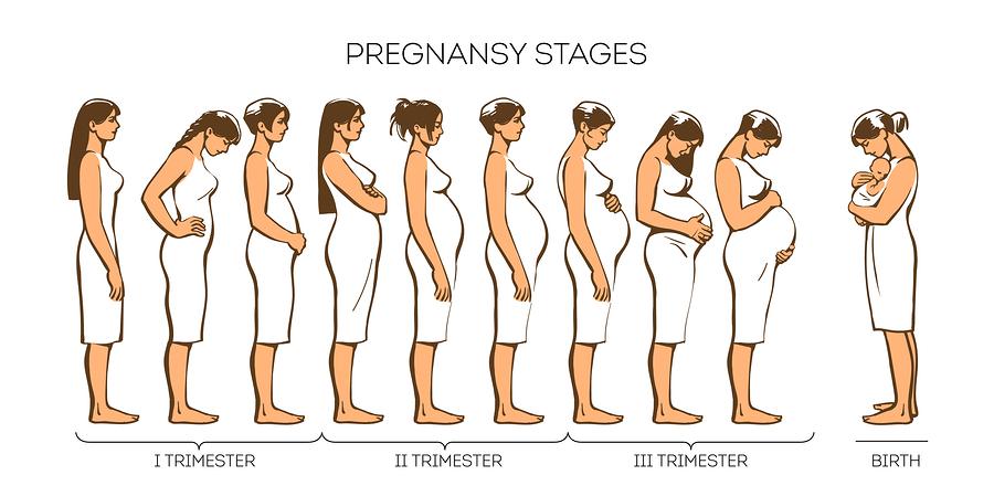 ระยะตั้งครรภ์